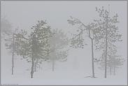 verloren... Moorlandschaft *Schweden*