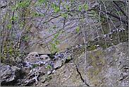 Nestlinge... Europäische Uhus *Bubo bubo*