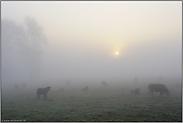 Stille... Sonnenaufgang *Niederrhein*