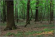 eine Woche später... Naturwald *NRW*
