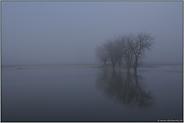 Nebelstimmung... Bislicher Insel *Niederrhein*