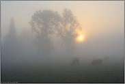 Nebel hängt über den Wiesen... Niederrhein*Nordrhein-Westfalen*