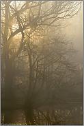 lichtdurchflutet... Frühnebel *Niederrhein*