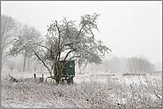 Schneefall im Strümper Bruch... Meerbusch *Nordrhein-Westfalen*