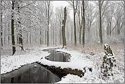 Winter im Bruch... Meerbusch *Nordrhein-Westfalen*