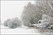 Randgehölz im Schnee... Meerbusch *Nordrhein-Westfalen*