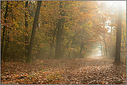Waldspaziergang... Herbst *goldener Oktober*