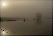 Flutwasser... Bislicher Insel *Niederrhein*