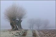 der Weg auf die Felder... Kopfbäume *Bislicher Insel*