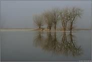 Frost und Hochwasser... Niederrhein *Bislicher Insel*