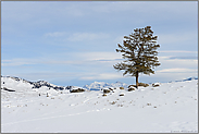 unterwegs im Yellowstone Nationalpark... Winterlandschaft *USA*