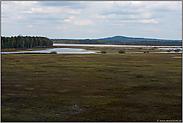 Blick über Schwingrasenflächen des Stora Gungflyet... Store Mosse *Schweden*