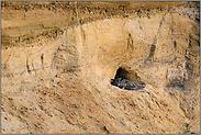 Brutplatz in der Sandgrube... Europäischer Uhu*Bubo bubo*