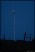 Gefährdungspotential Windkraft... Europäischer Uhu *Bubo bubo*