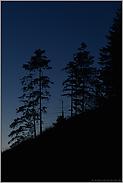 gegen den Nachthimmel... Bergwald *Alpen*